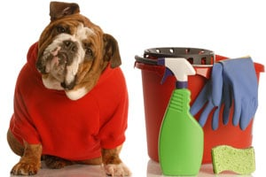 household items harm pets
