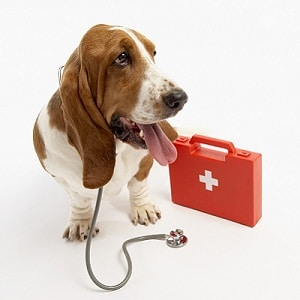 dog first aid tips