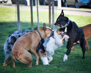letting dogs work it out at dog parks