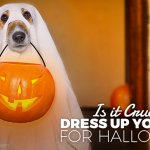 Is it cruel to dress your dog for Halloween?